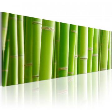 Tablou - Canvas print – In a bamboo bush