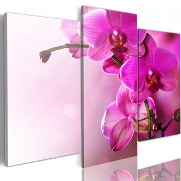 Tablou - Dark pink orchid