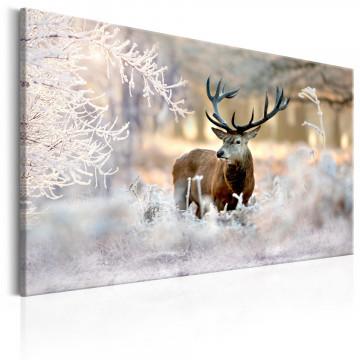 Tablou - Deer in the Cold