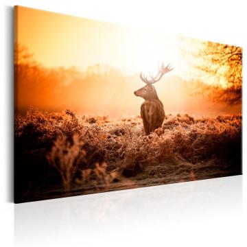 Tablou - Deer in the Sun