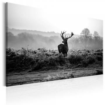 Tablou - Deer in the Wild