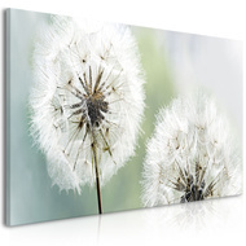 Tablou - Fluffy Dandelions (1 Part) Green Wide
