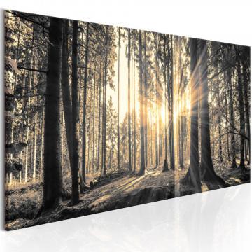 Tablou - Forest Sun