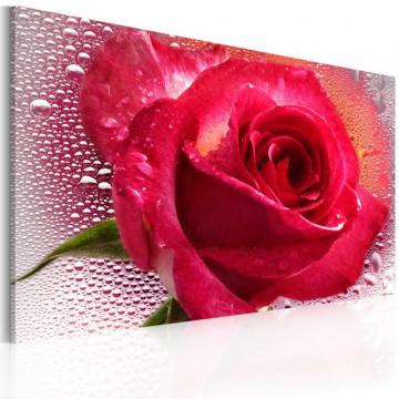 Tablou - Lady Rose