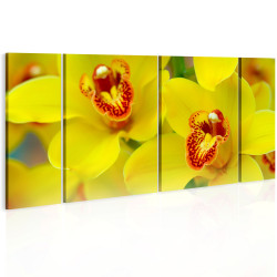 Tablou - Orchids - intensity of yellow color