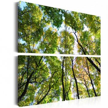 Tablou - Treetops