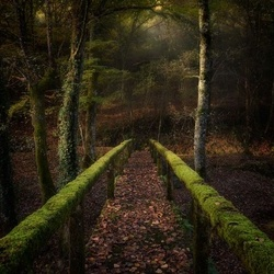 The Way To The Forest Photo Wallpaper Mural