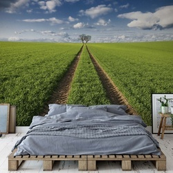 Trace & Trees Photo Wallpaper Mural