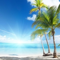 Tropical Beach Palm Trees Sea Sand Photo Wallpaper Wall Mural