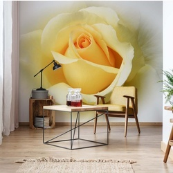Yellow Rose Photo Wallpaper Wall Mural