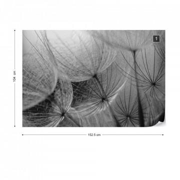 Dandelion Macro Black And White Photo Wallpaper Wall Mural