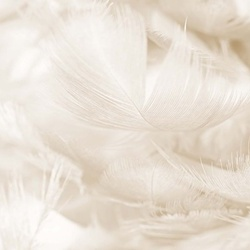 Feathers in Sepia