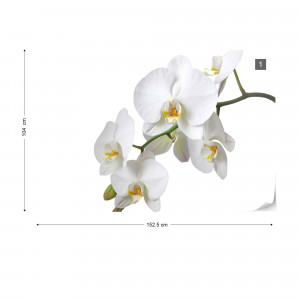 Flowers White Orchids Photo Wallpaper Wall Mural