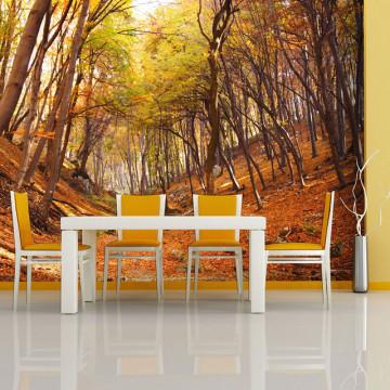 Fototapet - Autumn forest