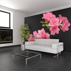 Fototapet - Azalea in Black