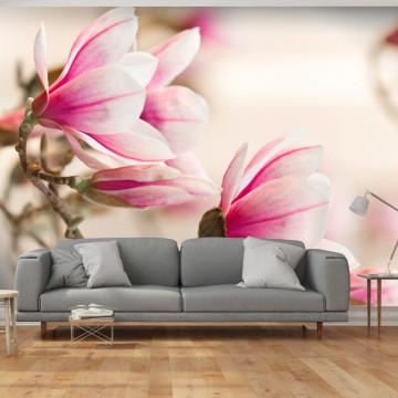 Fototapet - Branch of magnolia tree