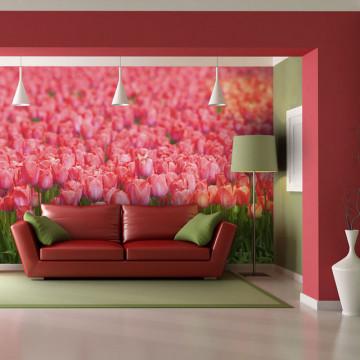 Fototapet - Spring meadow - fresh pink tulips