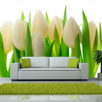 Fototapet - White tulips