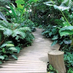 Jungle Path Photo Wallpaper Wall Mural