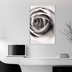 Poster - Structure of Petals