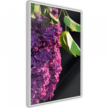 Poster - Violet May