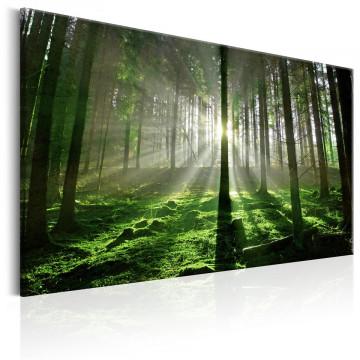 Tablou - Emerald Forest II
