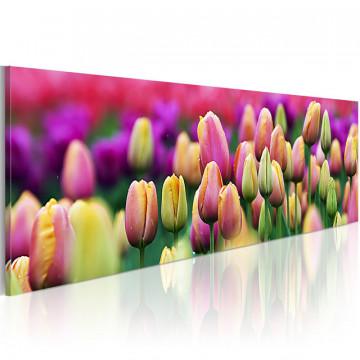 Tablou - Rainbow-hued tulips