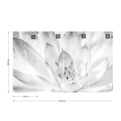 Aloe Plant Black And White Photo Wallpaper Wall Mural