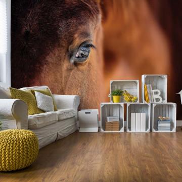 Beautiful Horse Photo Wallpaper Wall Mural