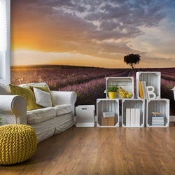 Destination Lavender Photo Wallpaper Mural