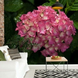 Flowers Hydrangea Pink Photo Wallpaper Wall Mural