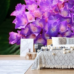 Flowers Hydrangea Purple Photo Wallpaper Wall Mural