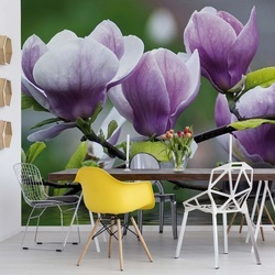 Flowers Magnolia Water Photo Wallpaper Wall Mural
