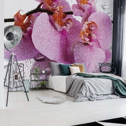 Flowers Orchids Drops Photo Wallpaper Wall Mural