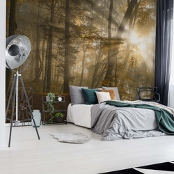 Forest Light Photo Wallpaper Mural