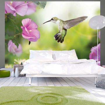 Fototapet - Humming-bird