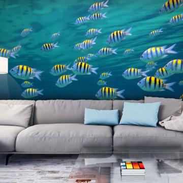 Fototapet - Underwater landscape - Caribbean