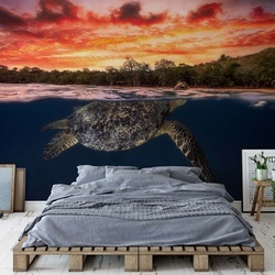 Green Turtle And Fire Sky Photo Wallpaper Mural