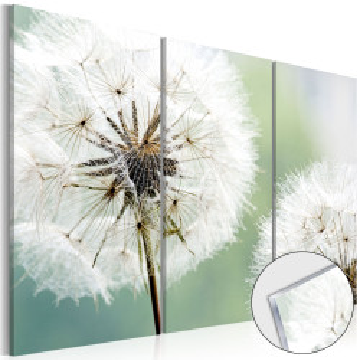 Imagine pe sticlă acrilică - Fluffy Dandelions [Glass]
