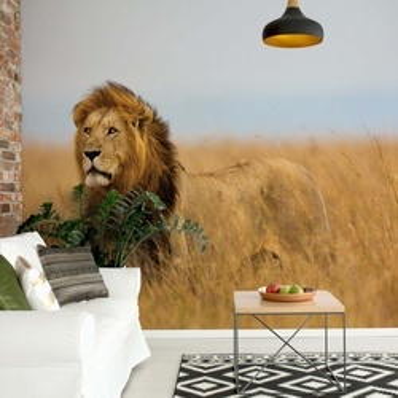 Lion Photo Wallpaper Wall Mural