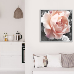 Poster - Delicate Rose
