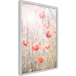 Poster - Poppies