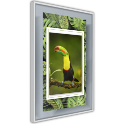 Poster - Toucan in the Frame