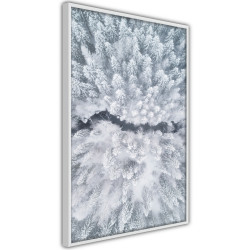 Poster - Winter Forest From a Bird's Eye View