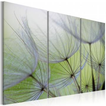 Tablou - Dandelions on the meadow