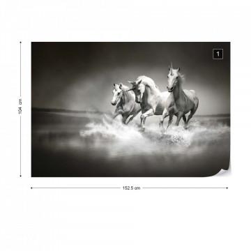 Unicorns Horses Black And White Photo Wallpaper Wall Mural