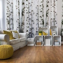 Birch Trees Forest Nature Texture Photo Wallpaper Wall Mural