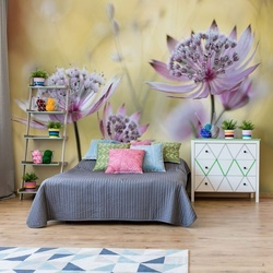 Astrantia Major Photo Wallpaper Mural