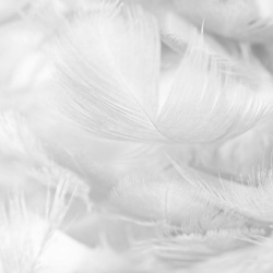 Feathers in Black & White