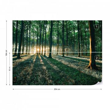 Forest Landscape Green Light Photo Wallpaper Wall Mural